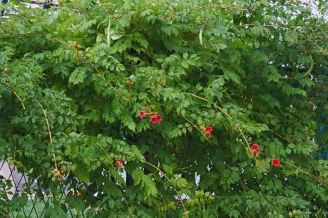 растения ягоды знакомые и незнакомые