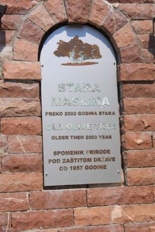 Черногория: Св. Стефан, Старый Бар, 2000-летняя олива