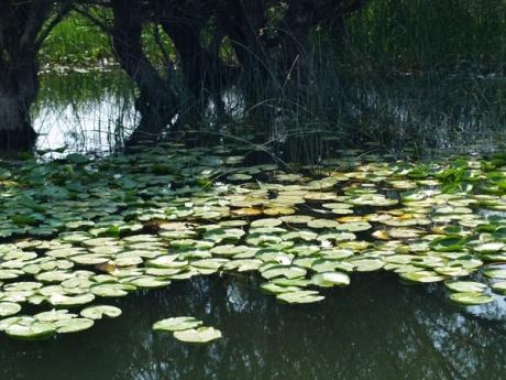 озеро лотос рыбалка