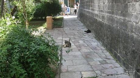 Черногория.  Экскурсия