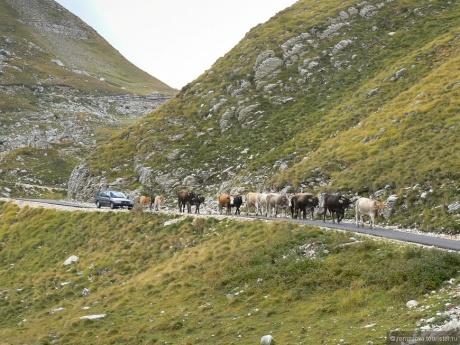 Тур Де Монтенегро