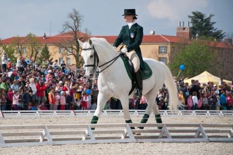 Lipica. Показательные выступления коней-липицанцев.