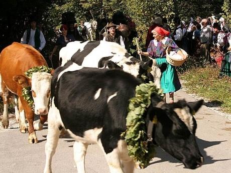Коровий бал