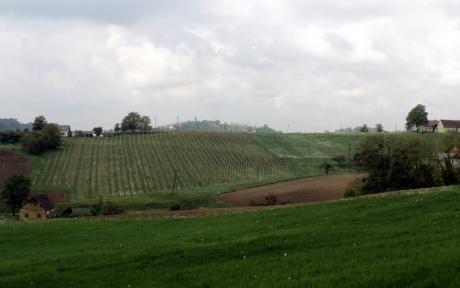 По виноградным местам Словении. Часть 2
