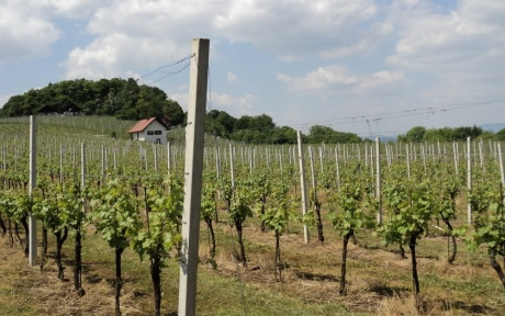 По виноградным местам Словении. Часть 4