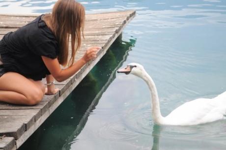 На озере Блед