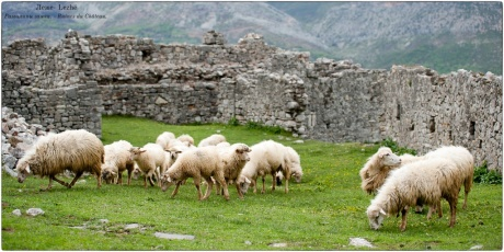 Албания, городок Леже - Lezhё