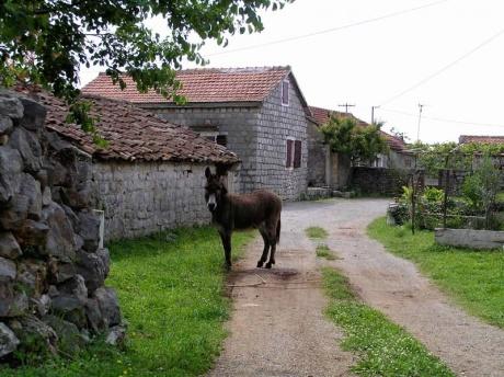 Отзывы о Черногории