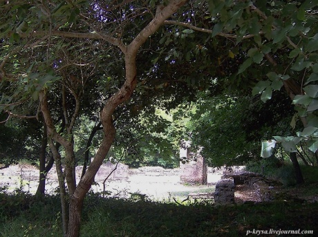 Бутринт. Дерево и камень