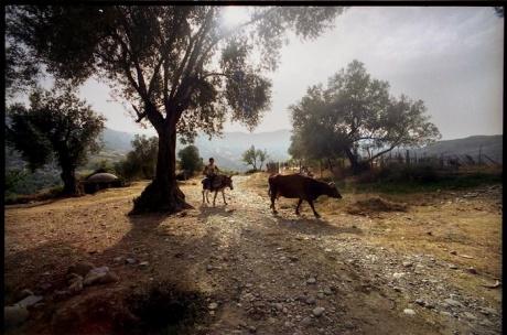 Албания. Корча - Тирана