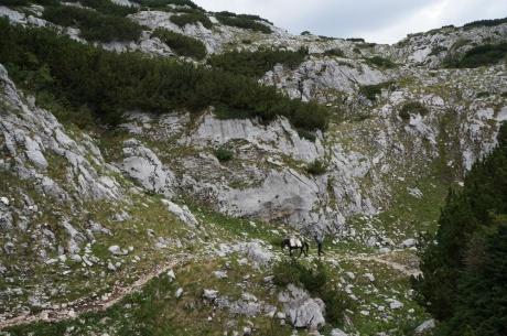 Черногорский автоэкспресс ( Тиват - Жабляк - Херцег Нови за неделю)