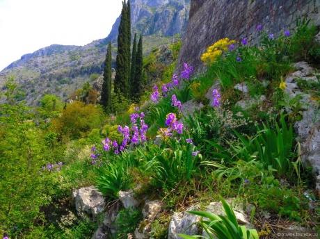 Прекрасная Черногория