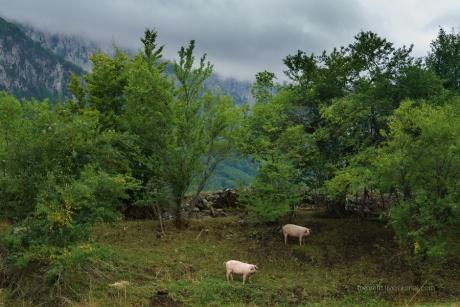 Албания. В заброшенной горной деревне.
