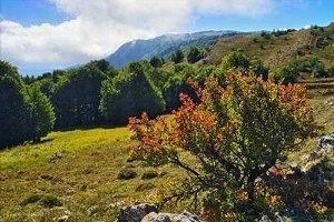 Внешняя политика Албании